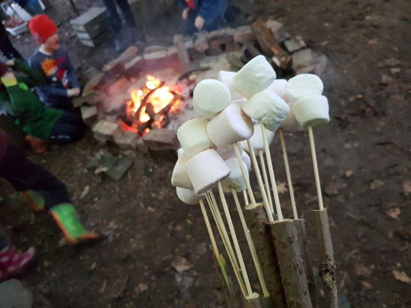Marshmallows campfire bushcraft   Rewilding Adventure