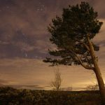 Tree under Orion